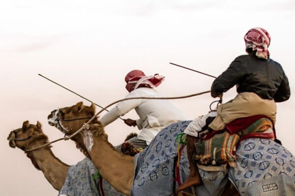 Camel racing is a sport that has been absorbed into the cultural history of the UAE