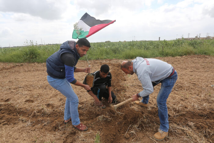 Palestinians celebrate Land Day in the Gaza Strip, planting trees to symbolize the Palestinian refusal to surrender to Israel war crimes, apartheid and aggression. Copyright (C) 2016 Mohammed Asad. All Rights reserved. Photos may be reproduced with proper credit to Mohammed Asad and the Arab Daily News