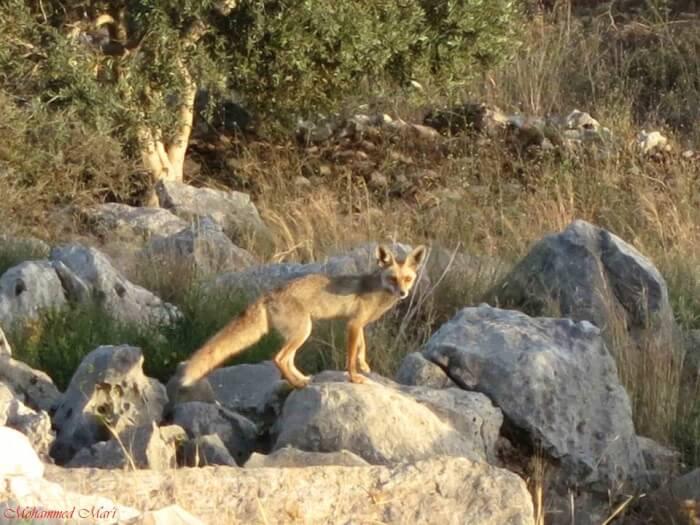 Palestine Wildlife